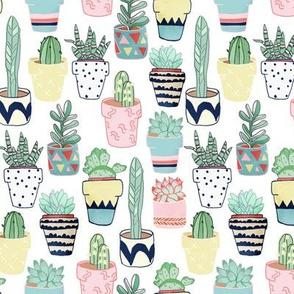 Cute Cacti In Pots