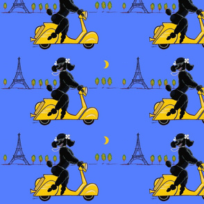 black_poodle_scooter_blue_copy