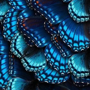 Blue Butterfly Mandala