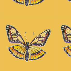 Yellow_and_Brown_butterfly_