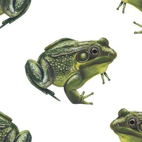 frogs on white