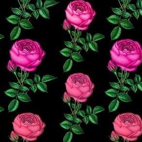Pink cabbage rose // Redoute rose // Pink Rose Botanical Art