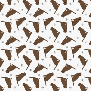 Tiny Chocolate Labrador Retrievers - gray
