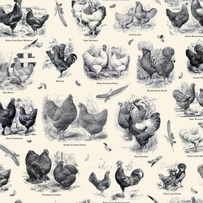 Poultry Envy Cream Black Toile