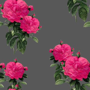 Redoute' Roses ~ Hot Pink on Dartmoor