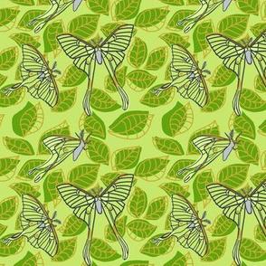 luna moth on leaves