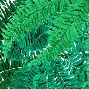 Tropical Fern ~ Jungle Dream