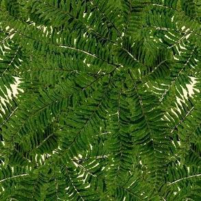 Tropical Fern ~ Gypsophila