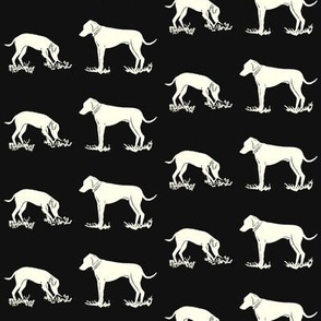 Dogs playing_black