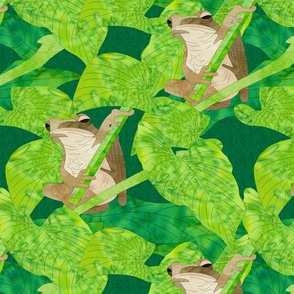 tree frogs and jungle leaves