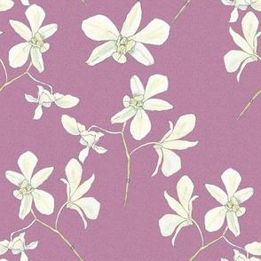 white orchids on dusky rose