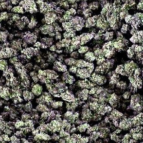 Cannabis: Purps
