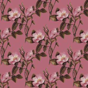 Charlotte Bronte's Wild Roses on Rose