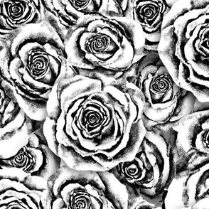 Platinum Roses