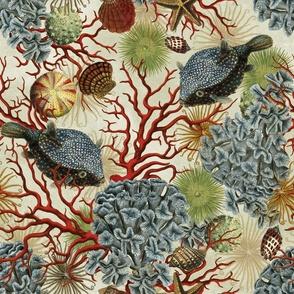Illustrations of Underwater Life