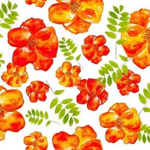 Poppies & Ferns
