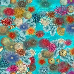 Ocean Floor  Sea Urchin City