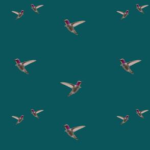 hummingbirds on picock blue