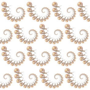 Snail Snail White