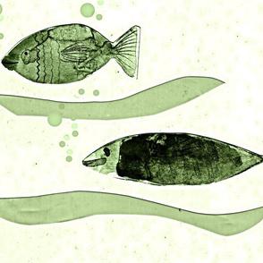 mint fish