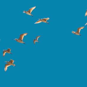 Seabirds in Santa Barbara