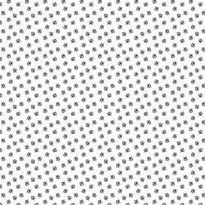 Ferret tracks - white