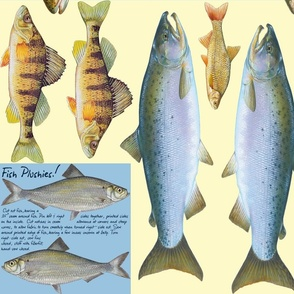 Fish plushies - perch, salmon, bass, whitefish, trout, sunfish, sturgeon, steelhead, walleye, pickerel, herring