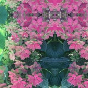 hydrangea fantastic 2