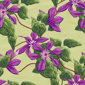 clematis_sq_yellow_greengrass_double AB