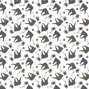 Trotting Boston Terriers and paw prints - white