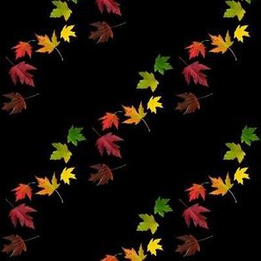 Rainbow Maple Leaves on Black