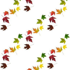 Rainbow Maple Leaves on White