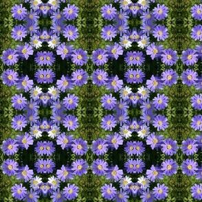 Purple Wind Flowers 6084