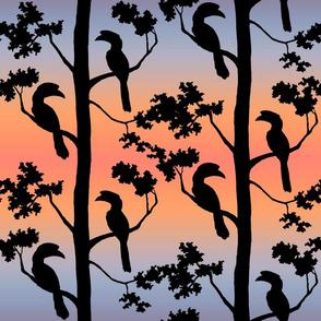 hornbills at sunrise