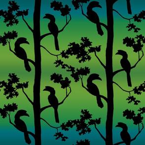 hornbills with green blue background