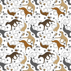 Trotting Whippets and paw prints - white