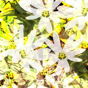 Prickly Starwort Flowers