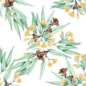 Gumnuts Eucalyptus Yellow Blossoms