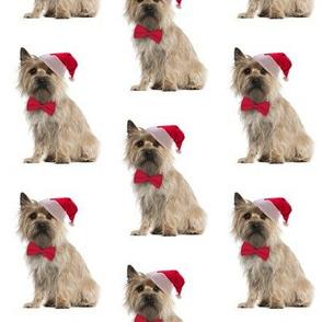 Santa Cairn Terrier
