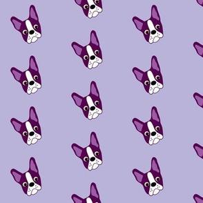 Puppy Passion the Purple Boston Terrier