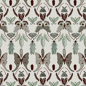 Moth Life Cycle - Clay, Seaspray