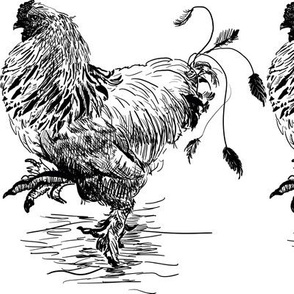 Rooster in black and white