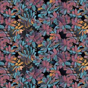 succulents kapahulu composition