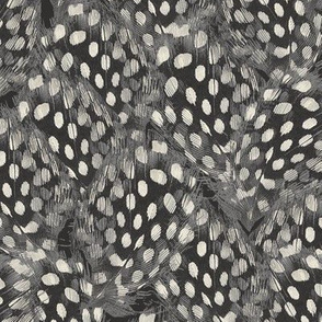 Feathers // Ebony