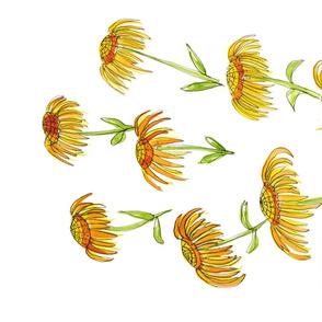 Yellow Echinacea 2