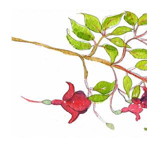 Scarlet Fuchsias