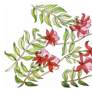 Red & Pink Fuchsias