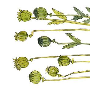 Green Poppy Pods