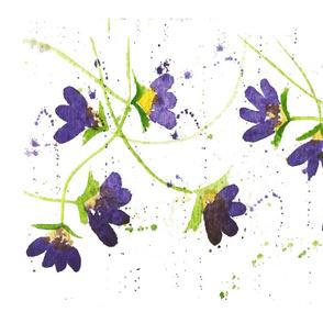 Purple Vining Violets