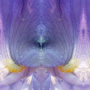 Fluid Violet Iris